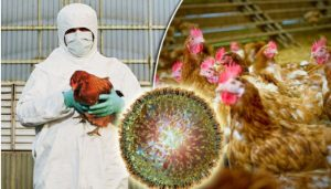 bird flu avian influenza signs and symptoms