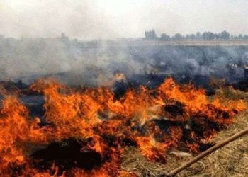 पराली में जला हुआ शव मिला